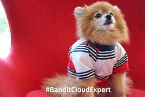 Meet the cloud expert