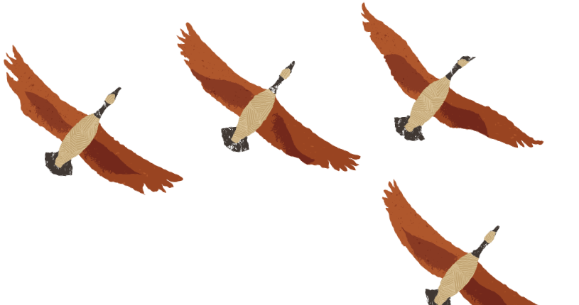 Orange geese flying